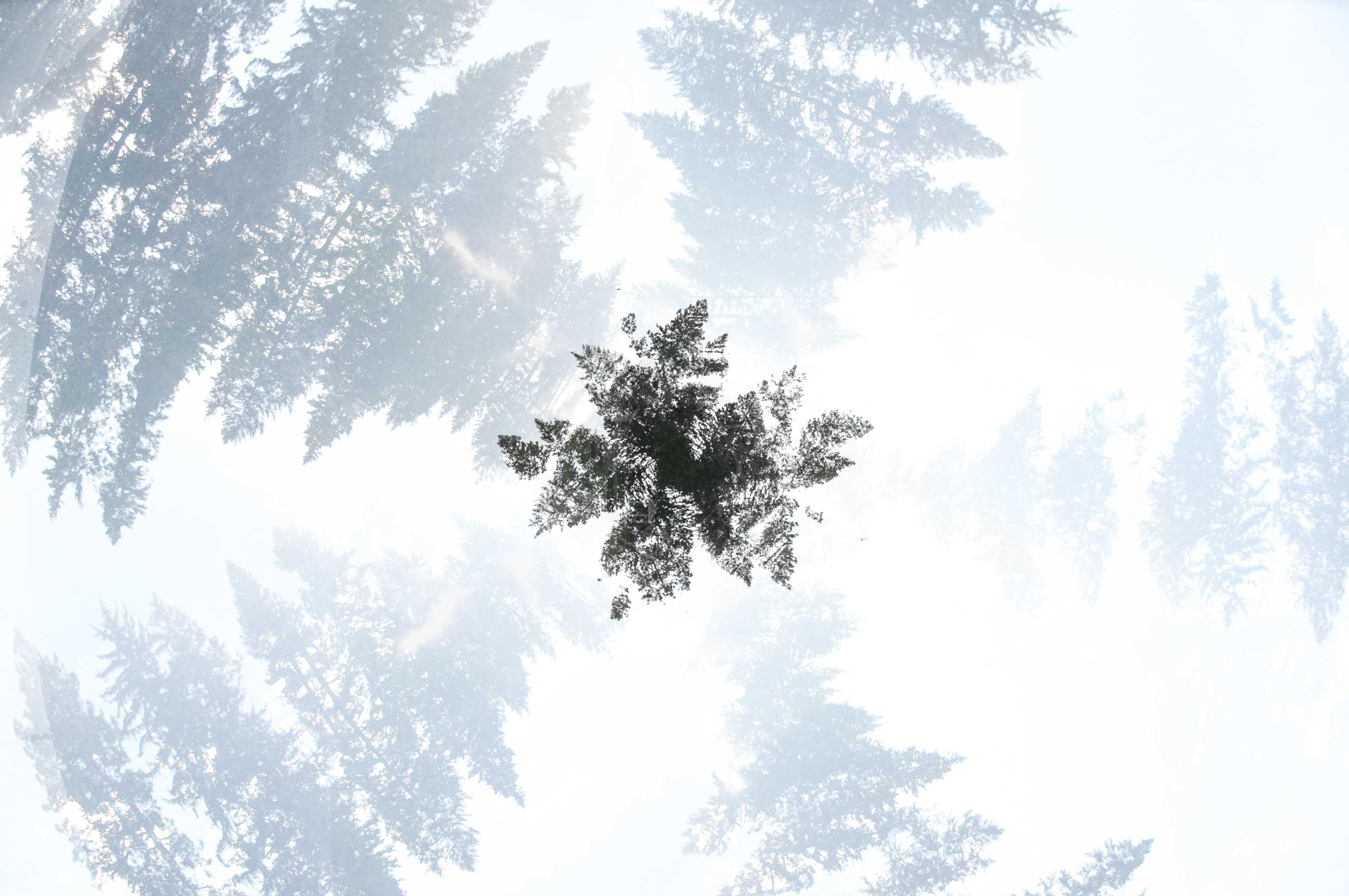 small-TreeFlake